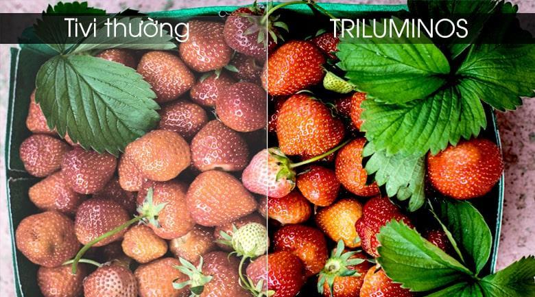tái tạo màu trung thực với công nghệ TRILUMINOS