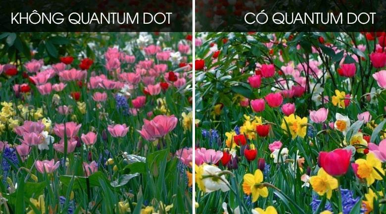 Công nghệ màn hình chấm lượng tử Quantum Dot (QLED) hiện đại bậc nhất hiện nay