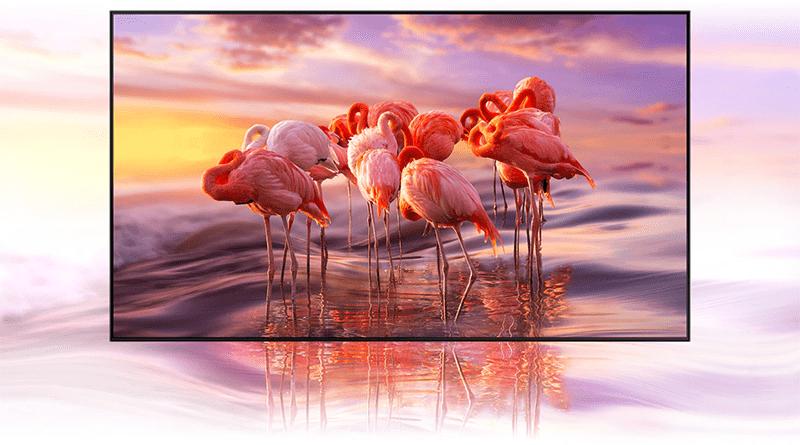 hiển thị hình ảnh với gam màu chuẩn và độ chính xác cao